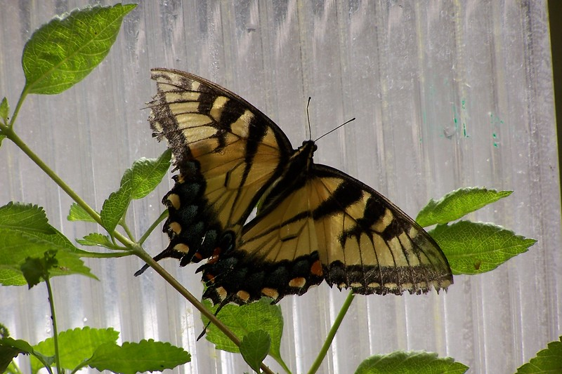 Az Trip - Butterfly Exibit & Rain Strom 006