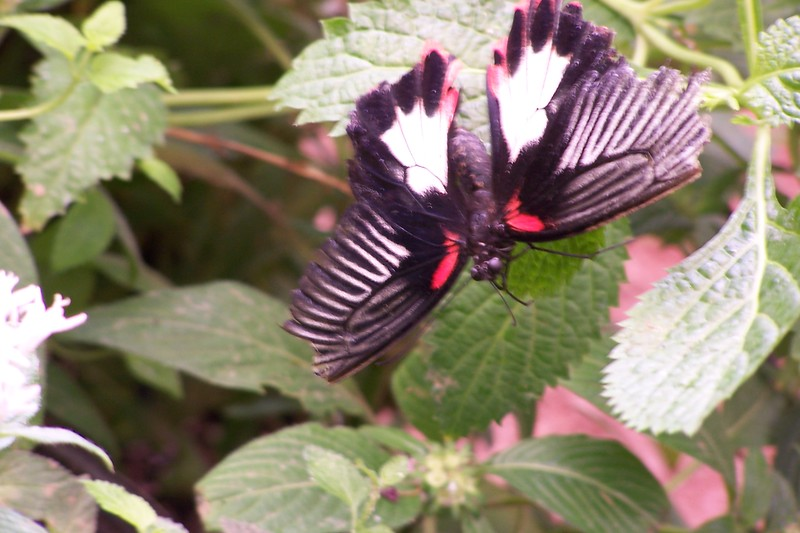 Az Trip - Butterfly Exibit & Rain Strom 001