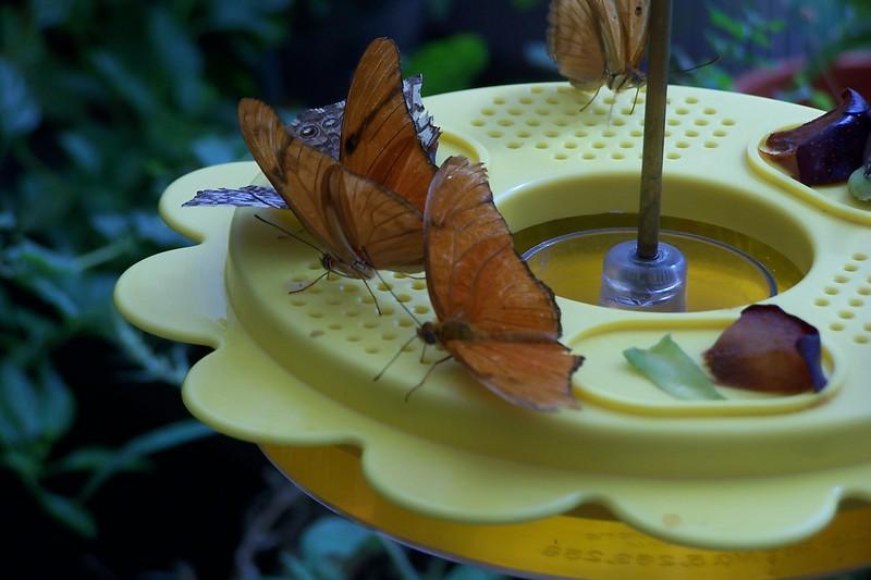 Az Trip - Butterfly Exibit & Rain Strom 008