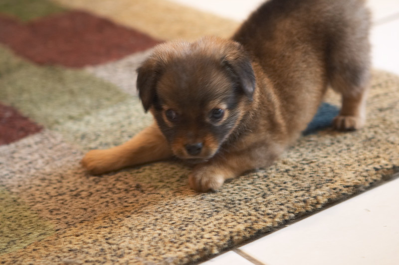 *cute mini barking sound* --Lulu