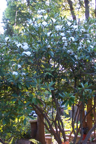 7-05 White Rodo South Garden