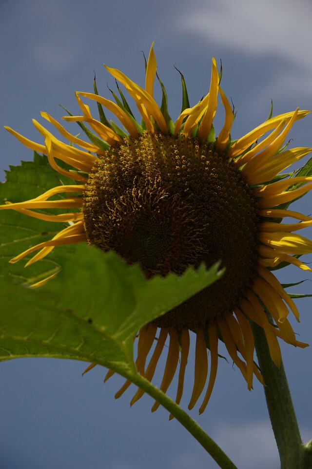 Taken using Canon 20D
