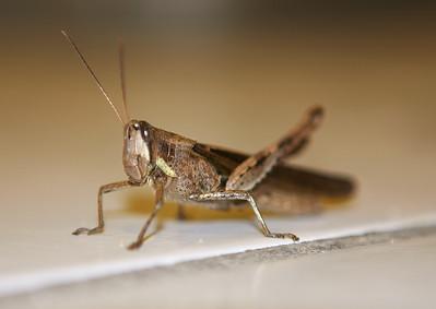 Fucking grasshopper