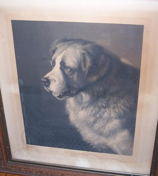 dog without frame