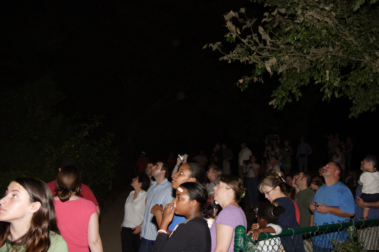 People watching the bats flying from under the bridge at dusk