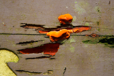 Dashing Fungi