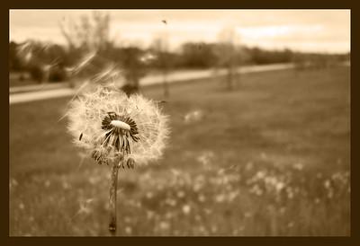 Puff in the Wind