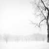 Mendon Ponds in a Blizzard