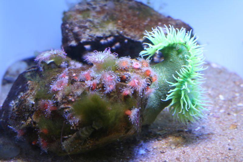 Newport, Oregon Aquarium