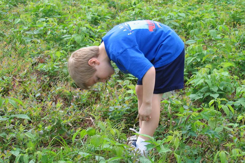 Anthony looking for more blueberries