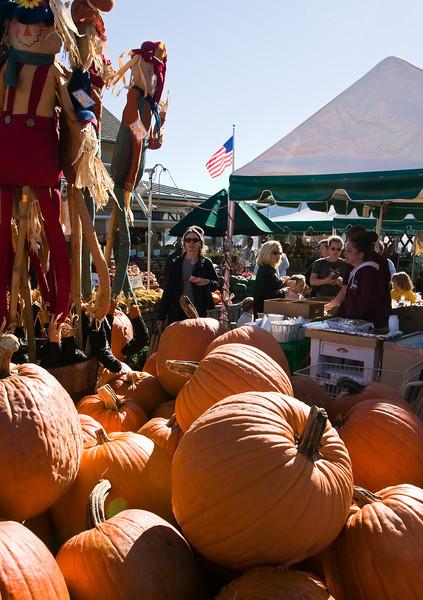 Orange pumpkins at Wilson Farms