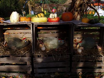 Gourd Chickens