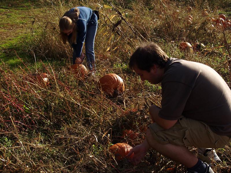 Battling Pumpkins