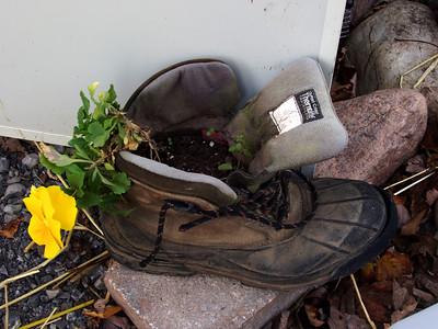 Flower in a Shoe
