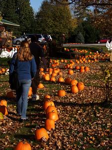 Following the Pumpkin Trail
