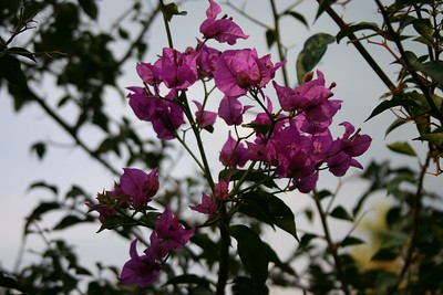 Israel: Bahai Gardens
