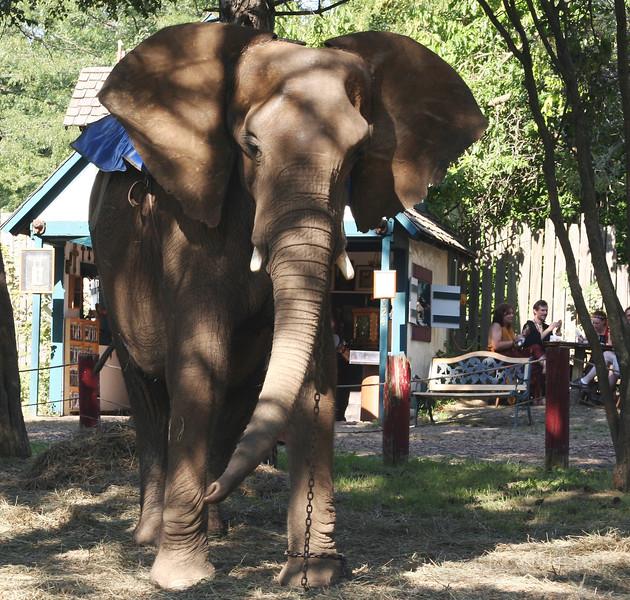 Rf05_Elephant