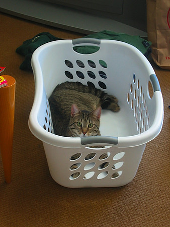 54 - Attempt 2 at getting a picture of Miryln being all cute in the laundry basket.jpg