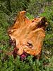 A colorful stump.