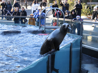 sea lion showing off