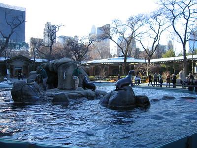 central park zoo, sea lions feeding