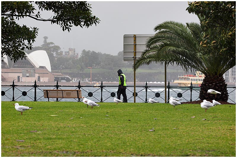 Milsons Point, Wednesday, October 12th 2005. <br /> <br /> A cool and showery day in Sydney. Not much happening here except I did like the way the birds are facing the same direction as the man.<br /> <br /> EXIF DATA <br /> Canon 1D Mk II. EF 24-70 f/2.8L@70mm 1/125s f/7.1 ISO 400.