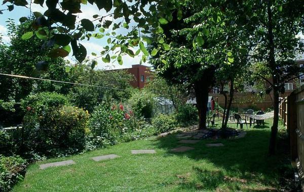 jeff's backyard #2