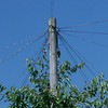 british telephone pole