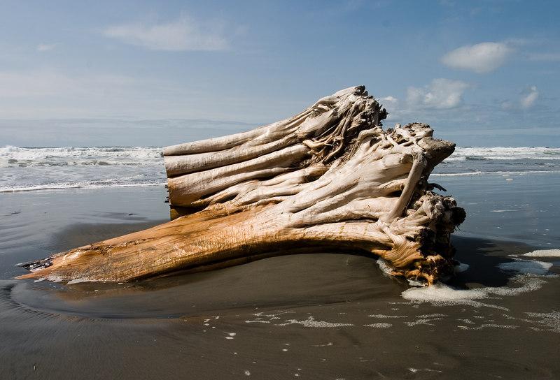Gnarly stump on the beach.