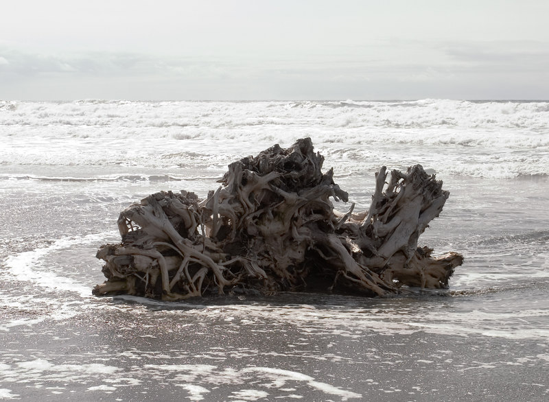 Gnarly stump on the beach.