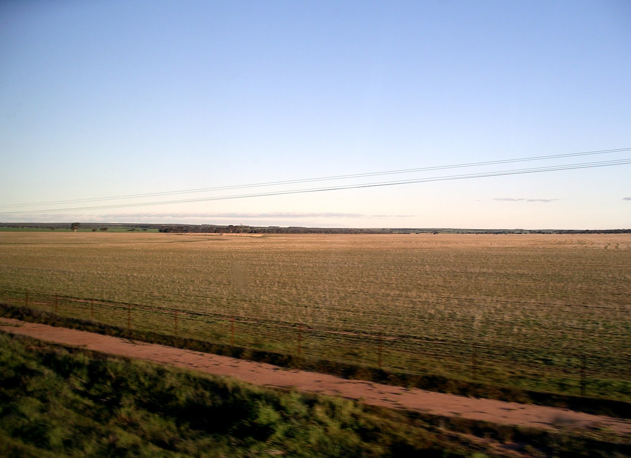 Fields west of Perth • Taken on the Indian Pacific Railway.