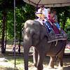 Renaissance Elephant?