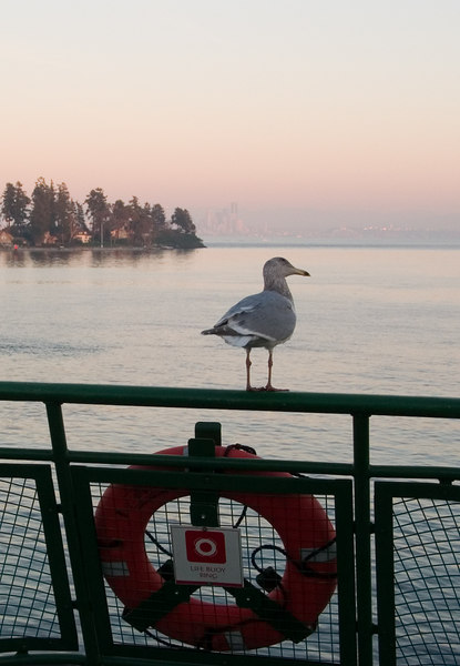 A seagull on the ferry back to town.