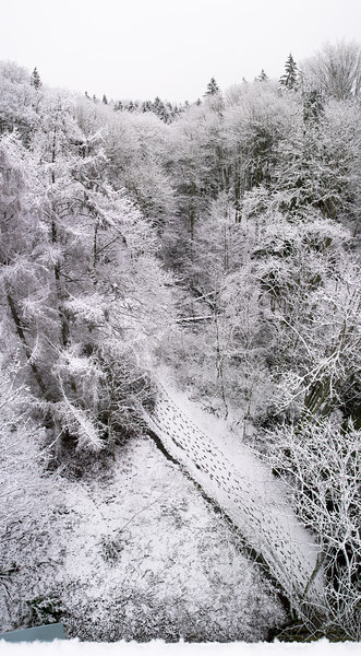 A vertical panorama over Ravenna Park from the pedestrian bridge.