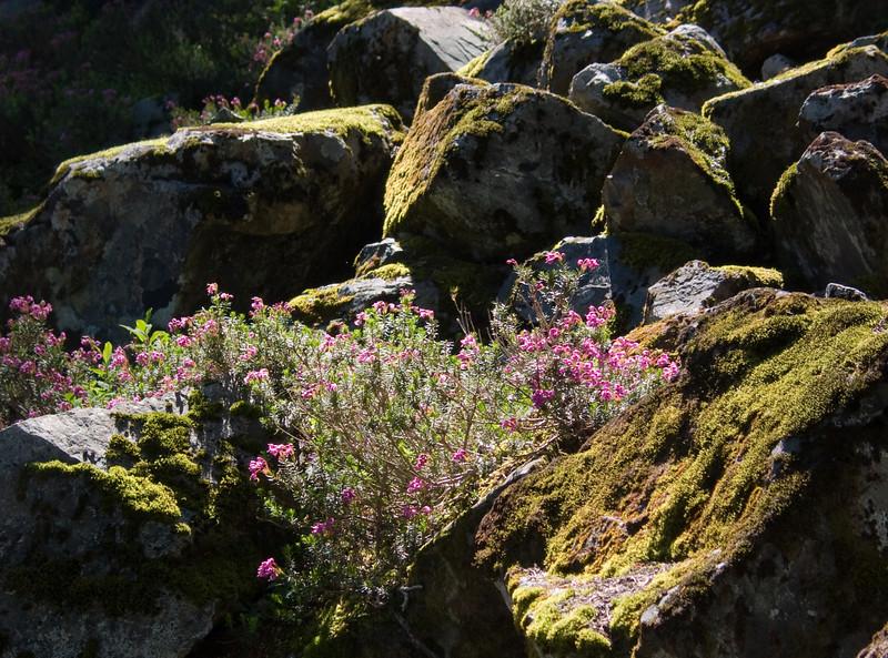 Flowering plants in the rock slope.