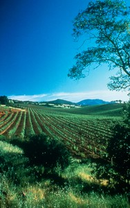 Sonoma: Vineyard - Sonoma Valley Visitors Bureau
