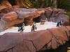 penguins of the Flamingo