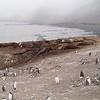 2005AntarcticaArgentina348