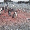 2005AntarcticaArgentina139