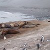 2005AntarcticaArgentina351