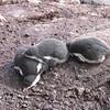 2005AntarcticaArgentina185