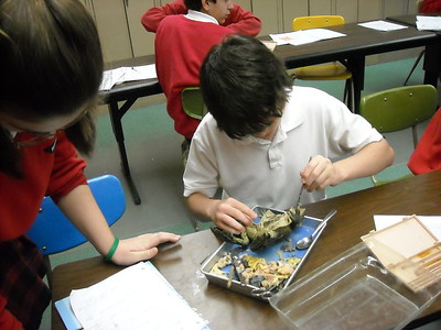 Frog Disection 2010
