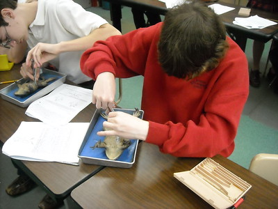 March Dissection 2012
