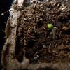 Saturday, March 25th<br /> <br /> Zucchini number 5