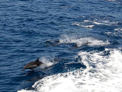 7/28/2006 - Snokling Outing @ Catalina Island