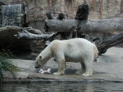 2006   San Diego Zoo  ,  Disney California , Princess  Lunch 015