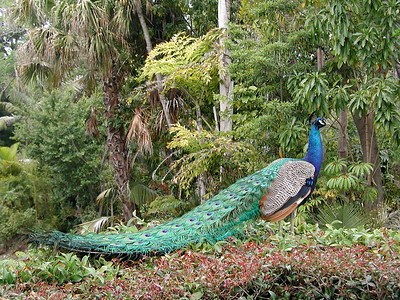 2006   San Diego Zoo  ,  Disney California , Princess  Lunch 082