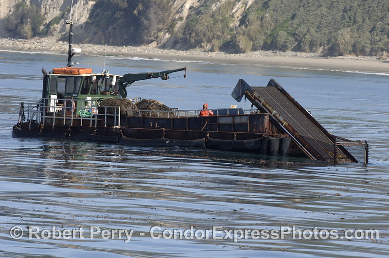 "The kelp cutter ""Ocean Harvest"" at work gathering giant kelp (Macrocystis) to feed abalones at their Cayucos farm"