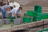 Commercial oyster farmers from the Hope Ranch farm unload their products at the dock