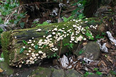 Mushroom, mushroom!